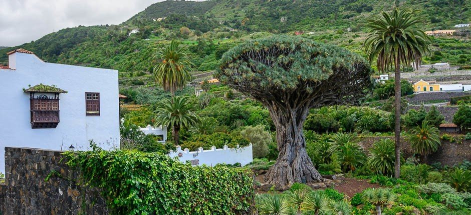 visit de dragon tree tenerife